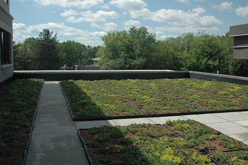 green roof pic